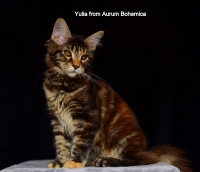 Yulia from Aurum Bohemica