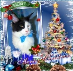 Vánoce!!!