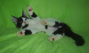 Poslední volné koťátko !!!