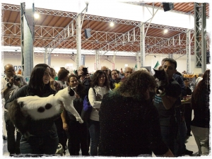 World cat show Wien