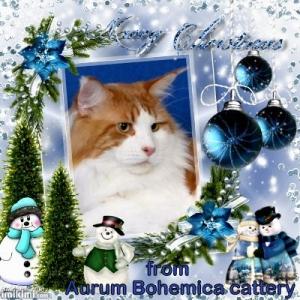 Krásné Vánoce všem !!!!