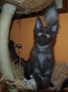 Kočička Tamarka roste do krásy