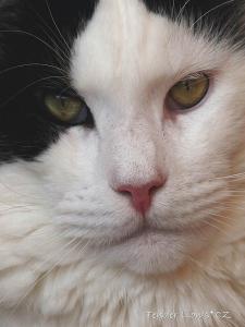 Keanu- krasavec se zasněným pohledem
