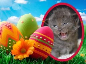 Veselé Velikonoce všem !!!!!!