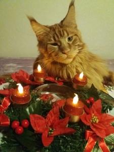 Moc děkuji všem za krásná přání a vám všem jen to nej do nového roku !!!