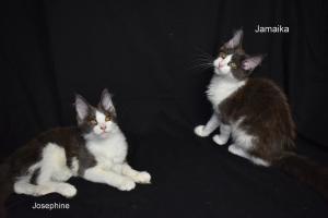 Nové fotky v sekci koťátka