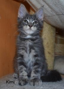 POslední volné koťátko z vrhu K