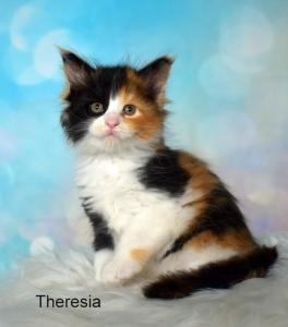 Představujeme vám naše nová krásná koťátka