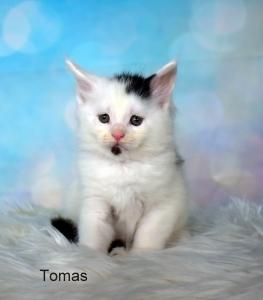 Volná koťátka Quentin, Tomas a Piper hledají nové domovy