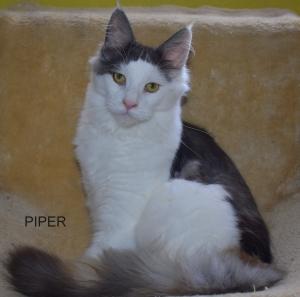 Piperka ještě hledá nový domov