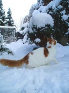 Sníh !! sníh !!!