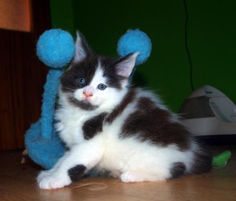 Některá z našich koťátek jsou ještě volná !!!