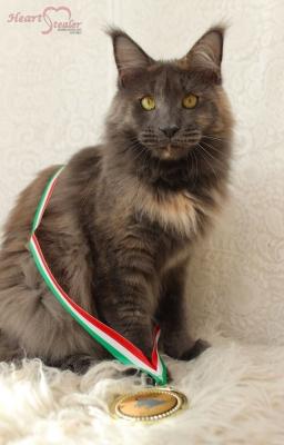 Gratulace do Maďarska !!!!