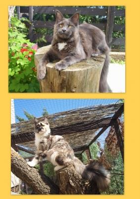 Máme nová koťátka- vrhy S a T